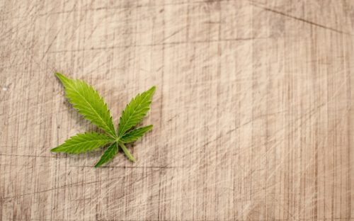 Simple Possession of Marijuana Case: Her Majesty the Queen v. Dallas Perreault